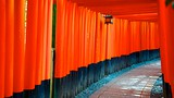 Fushimi Inari Shrine - Kyoto - Tourism Media