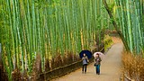 Arashiyama Bamboo Forest - Japan - Tourism Media
