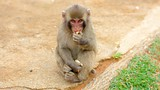 Arashiyama Monkey Park - Kyoto - Tourism Media