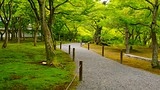 Tofukuji Temple - Kyoto - Tourism Media