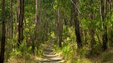 Dandenong Ranges National Park - Sassafras - Tourism Media