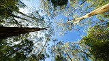 Dandenong Ranges National Park - Australia - Tourism Media