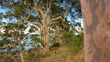 Observation Head Lookout - Batemans Bay - Tourism Media