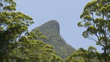 Mount Warning National Park - Murwillumbah - Destination NSW