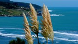 Raglan - Photo: Hamilton & Waikato Tourism