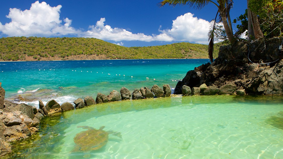 Coral World Ocean Park In St Thomas Expedia Ca