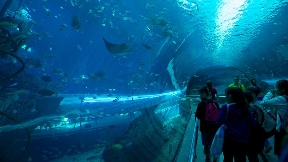 National-Museum-Of-Marine-Biology-And-Aquarium-93564.jpg