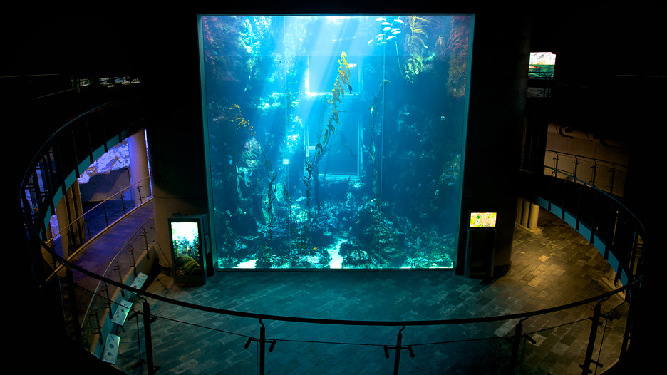 National Museum of Marine Biology and Aquarium in Pingtung County ...