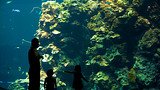 National Museum of Marine Biology and Aquarium - Pingtung County - Tourism Media