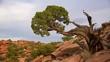 Grand View Point Trail - Moab - Tourism Media