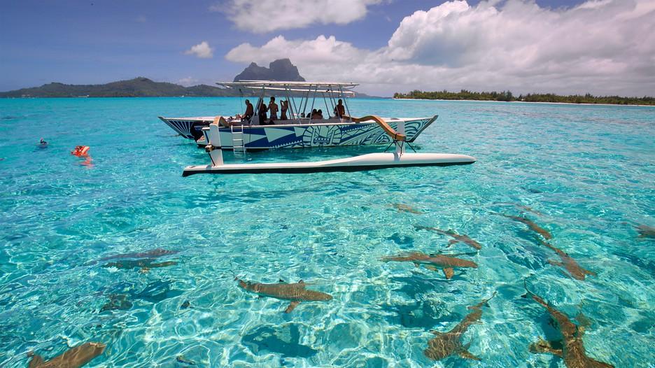 Volo Hotel Polinesia