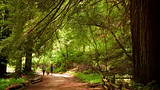 Redwood Regional Park - Tourism Media