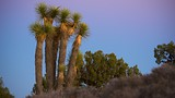 Keys View - Joshua Tree National Park - Tourism Media