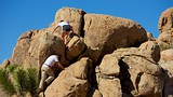 Quail Springs - Joshua Tree National Park - Tourism Media