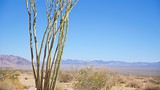 Joshua Tree National Park - Tourism Media