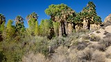 Cottonwood Springs - Joshua Tree National Park - Tourism Media