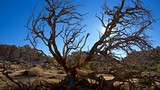 Hidden Valley - Joshua Tree National Park - Tourism Media
