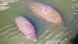 Manatee Viewing Center - Tampa - Tourism Media