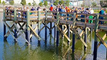 Manatee Viewing Center - Apollo Beach