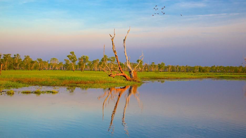 Yellow Water Billabong Kakadu Northern Territory Attraction Expedia Com Au