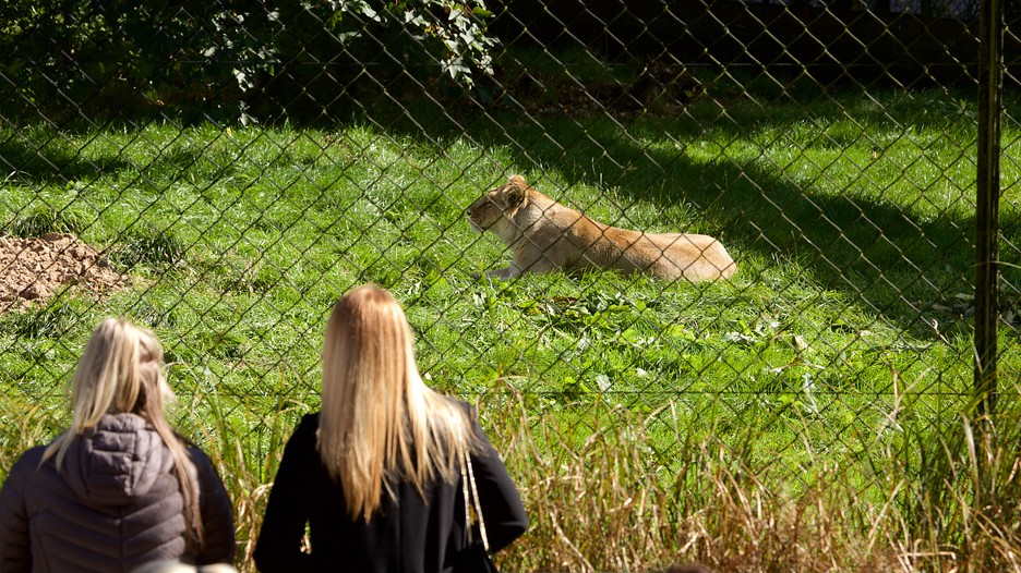 Chester Zoo In Chester England Expedia