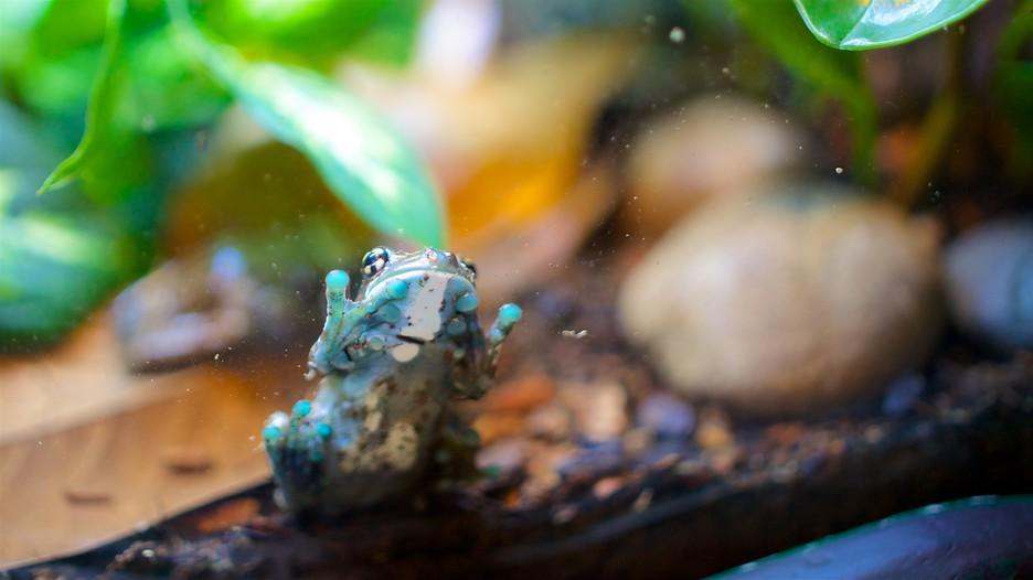 Loveland Living Planet Aquarium In Sandy Utah