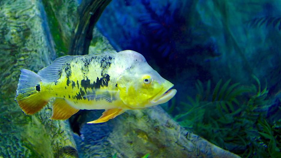 Loveland Living Planet Aquarium In Sandy Utah Expedia
