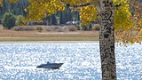 Big Bear Lake - Tourism Media