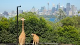 Taronga Zoo - Sydney - Tourism Media