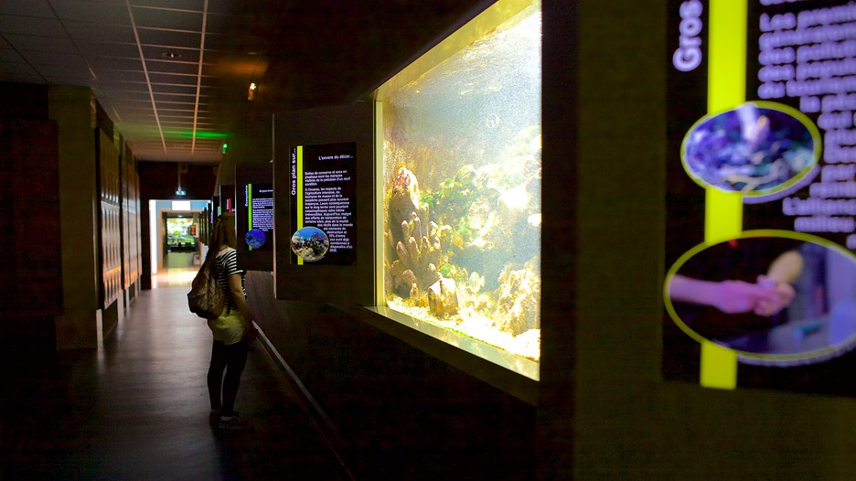 musee aquarium de nancy in nancy grand est expedia