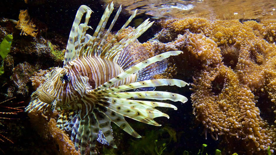 musee aquarium de nancy in nancy grand est expedia ca