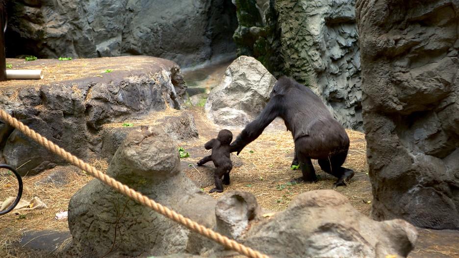 Buffalo Zoo In Buffalo New York Expedia Ca