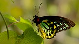 Butterfly World - Fort Lauderdale - Tourism Media