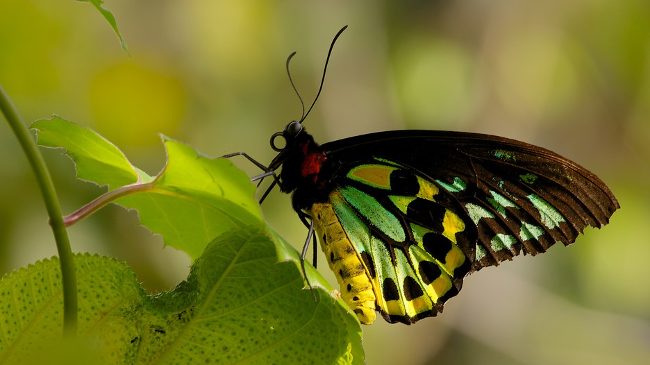 Butterfly World in Coconut Creek, Florida | Expedia.ca
