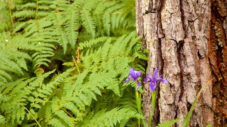 Mendocino Coast Botanical Gardens Fort Bragg