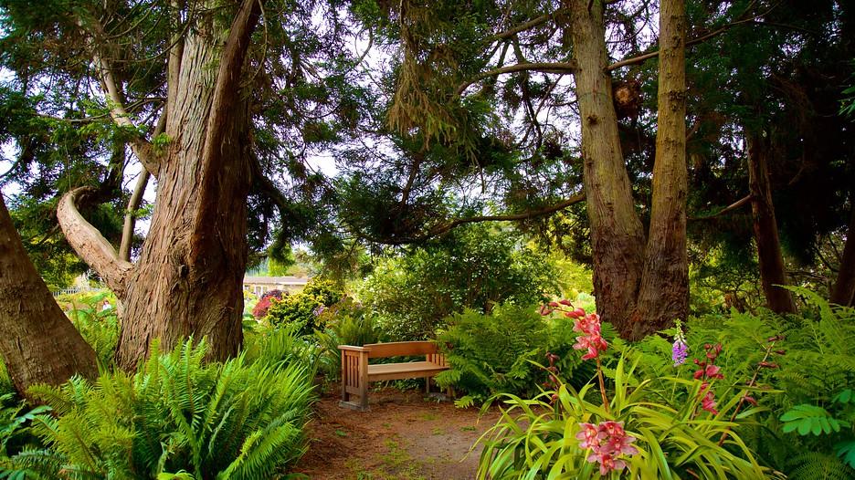 Mendocino coast botanical gardens in fort bragg - Mendocino coast botanical gardens ...