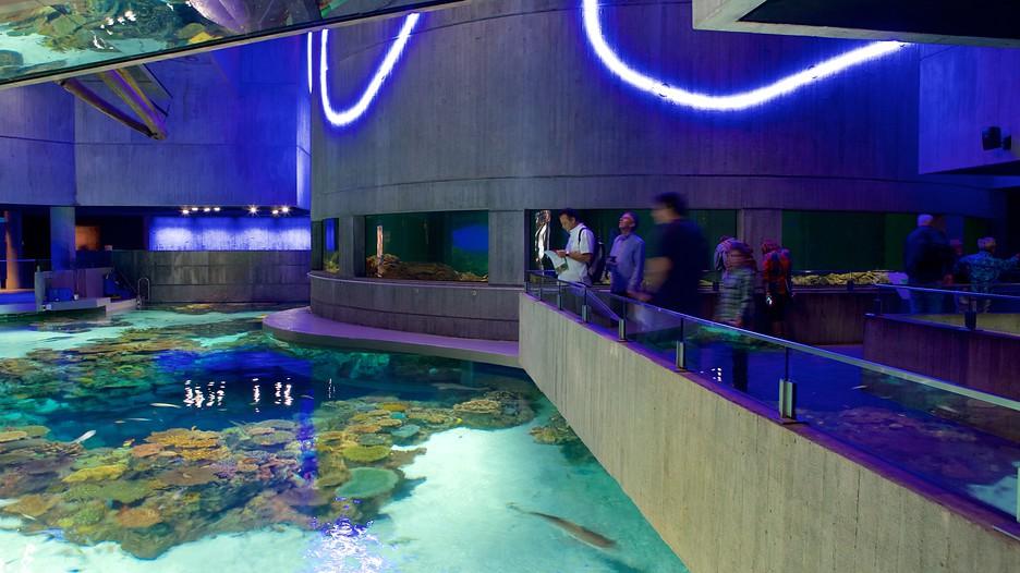 Aquarium Baltimore Maryland