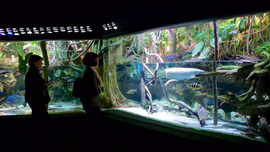 National aquarium in baltimore baltimore maryland Aquarium in baltimore