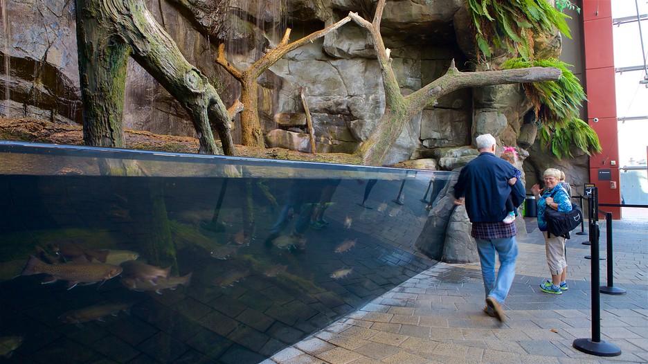 National Harbor Maryland >> National Aquarium in Baltimore in Baltimore, Maryland | Expedia