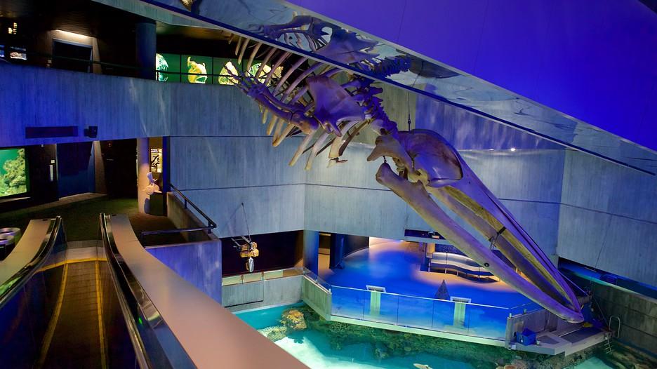 National Aquarium in Baltimore - Baltimore, Maryland ...