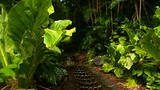 Allerton Botanical Garden - Koloa - Tourism Media