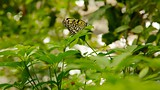 Butterfly Pavilion - Westminster - Tourism Media