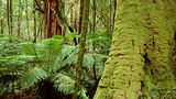 Great Otway National Park - Great Ocean Road - Tourism Media
