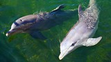 Dolphins Plus Bayside - Florida Keys - Tourism Media