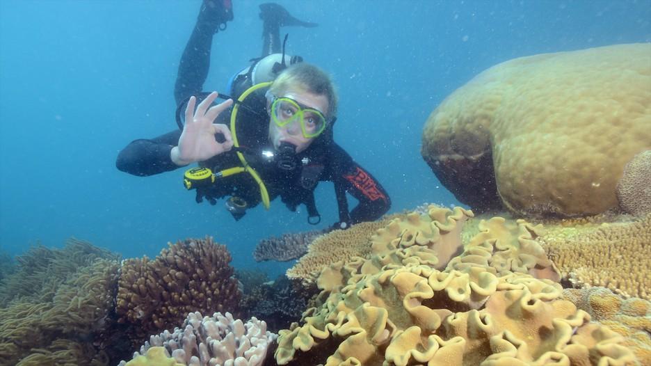 Great Barrier Reef In Cairns Queensland Expedia