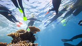 Great Barrier Reef - Cairns - Tourism and Events Queensland
