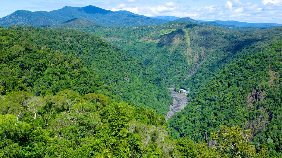 Skyrail Rainforest Cableway in Cairns, Queensland   Expedia