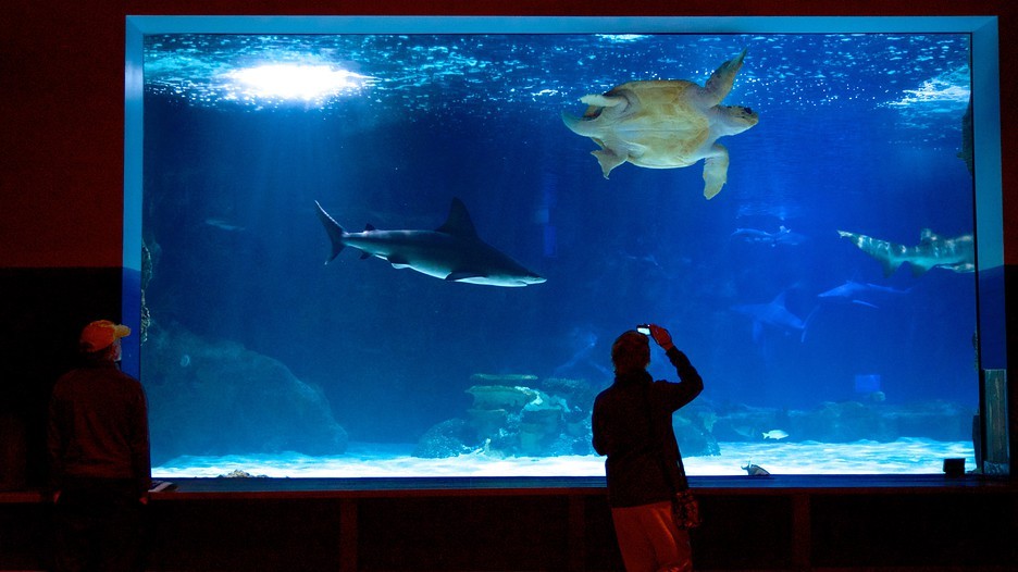 image gallery newport aquarium packages