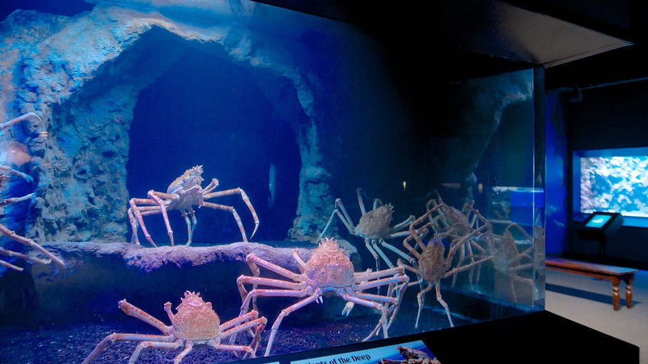 The Newport Aquarium is an aquarium located in Newport, Kentucky, United States at Newport on the Levee. The aquarium has 70 exhibits and 14 galleries, including five seamless acrylic tunnels totaling over feet (61 m) in length.