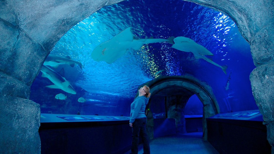 Newport Aquarium In Newport Kentucky Expedia